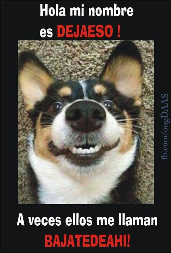 Imágenes de graciosas mascotas