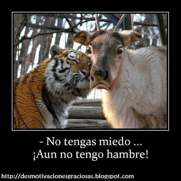 Imágenes graciosas animales humor gratis
