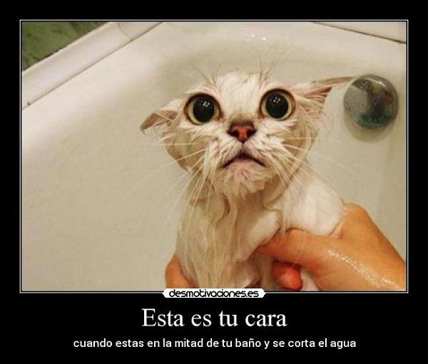 Imágenes graciosas bañándose
