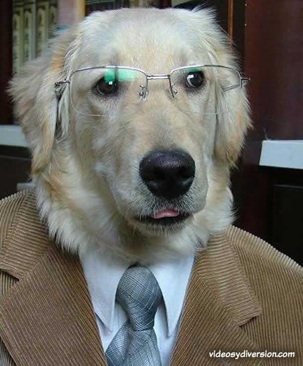 Imágenes graciosas con perros