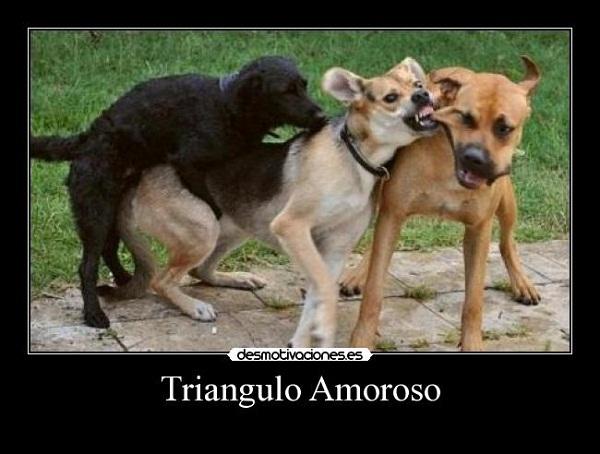 Imágenes graciosas de amor animales